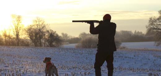 Лучшие гладкоствольные ружья для охоты: на что обращать внимание при выборе